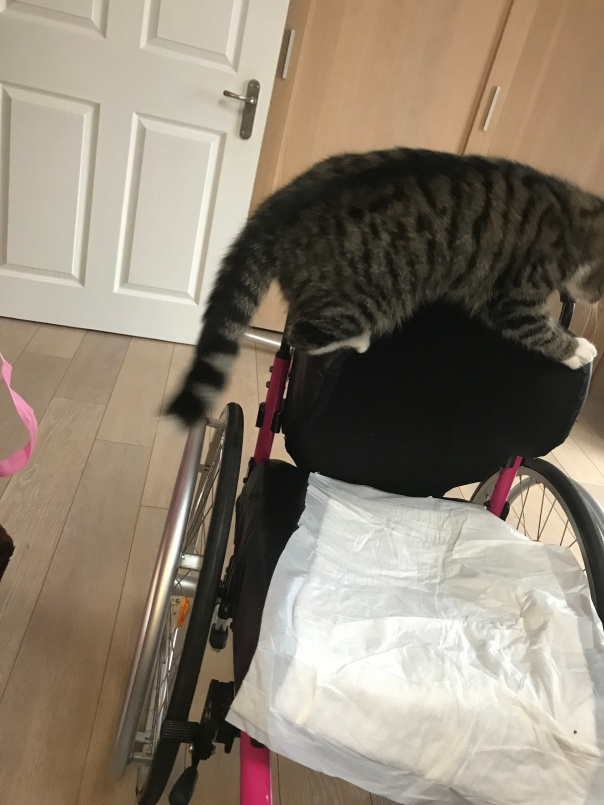 Tilly climbing mount chair
